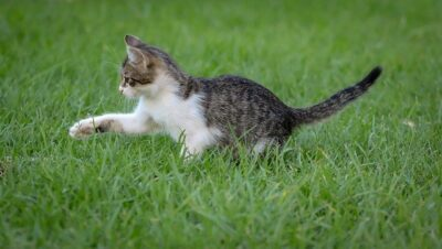tanda kucing sehat dan bahagia